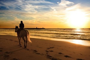 Travelling with a riding companion adds an extra dimension to your destination. Photo / Thinkstock