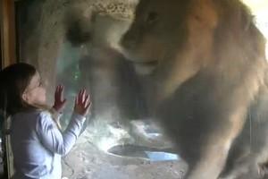 Sofia the lion tamer. Photo / Youtube