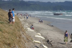 A crowd gathers to look at the containers and milk powder washed up at Waihi Beach from the Rena. Photo / Todd Ranson