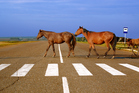 Eric Thompson believes that horses and cyclists do not belong on highways. Photo / Thinkstock