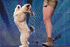 Pudsey performs at Britain's Got Talent. Photo / AP