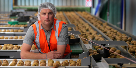 Te Puke growers like Marty Robinson who've lost their gold kiwifruit crops to Psa now face huge capital outlay to replant if they want to stay in the industry. Photo / Alan Gibson