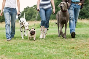 Dog owners have a responsibility to clean up after their animals. Photo / Thinkstock