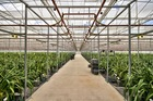 The glasshouse could be used for crops other than orchids. Photo / Supplied