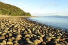 Boulder beach on Hauturu (Little Barrier Island). Photo / Cliff Taylor