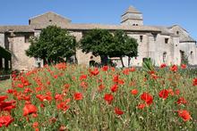 Fields of poppies behind St Paul de Mausole in St Remy de Provence, where Vincent van Gogh was a patient. Photo / Jim Eagles