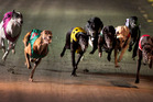 The dogs set off on their race. Photo / Natalie Slade