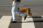 Crossing with a dog is emotionally much less daunting. Photo / Getty Images