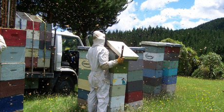Bad weather and growing world demand has pushed NZ honey prices to record highs. Photo / Supplied