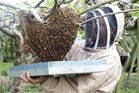 The price of honey has hit a record high on the back of bad summer weather and growing global demand. Photo / APN