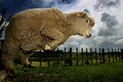 A new survey shows restricting foreign investment in rural land is seen as low priority by industry leaders. Photo / NZH