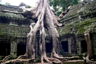 The jungle temple of Ta Prohm in Cambodia. Photo / Jim Eagles