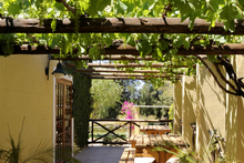 Grape vines can make a good deciduous canopy over a patio. Photo / Thinkstock