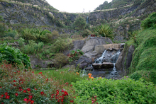 The subtropical Whangarei Quarry Gardens. Photo / Alexia Santamaria