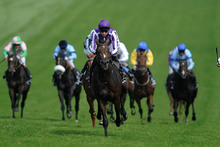 Camelot's brave victory at the Curragh comes after his impressive five-length win in the Derby at Epsom. Photo / AP
