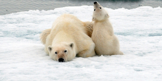 The island of Spitsbergen is the domain of polar bears and Svalbard reindeer. Photo / Thinkstock