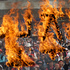 South Korean street vendors burn letters reading 'Korea Democratic Street Vendors Confederation' during a rally against the government's crackdown on the group in Seoul, South Korea. Photo / AP