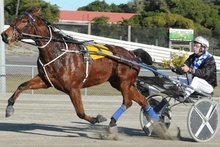 Irish Whisper will have his final New Zealand start on Friday. Photo / Otago Daily Times