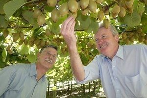 Growers' leader Neil Trebilco (left) - with fellow kiwifruit expert Tim Goodacre - says the change to Gold3 is 'huge'. Photo / APN
