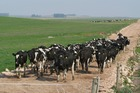 NZFSU has seen below forecast milk production this season due to poor conditions in Uruguay. Photo / Supplied
