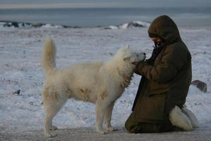 Last Dogs of Winter. Photo / Supplied