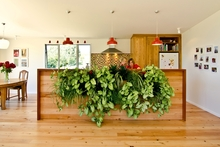 The 'living wall' in the Southwards' home is a focal point. Photo / Your Home & Garden