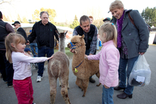 Animal, vegetable or mineral, it's all on show at Fieldays. Photo / Jeff Brass