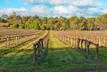 Wine growing regions around Australia have planned events to warm you up this winter. Photo / Thinkstock