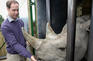 Prince William, the Duke of Cambridge, feeds a 5-year-old black rhino called Zawadi. Photo / AP
