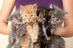 But when Google let its latest cyber brain loose on the internet it went straight for cats. Photo / Thinkstock