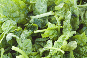 A Swedish study shows why spinach makes us stronger. Photo / Thinkstock