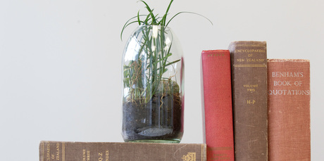 Justin Newcombe's DIY terrarium. Photo / Richard Robinson