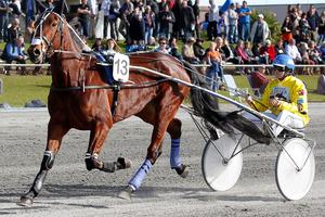 No.13 Escapee driven by Mark Purdon. Photo / Christine Cornege