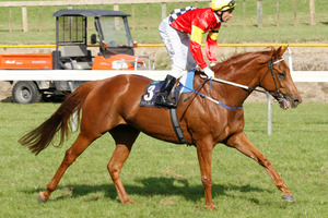 The Wyong Cup is on the agenda for Ginga Dude who beat Booming in the Tattersalls Cup at Eagle Farm on Saturday.  Photo / Kenny Rodger