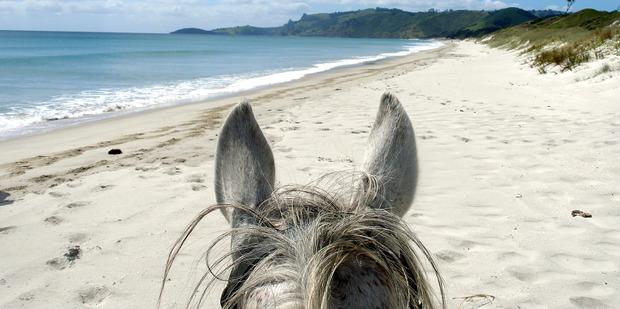 Pakiri Beach Horse Rides. Photo / Supplied