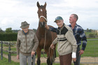 Steeplechaser Climbing High was put down last month after snapping a leg. Photo / Bay of Plenty Times