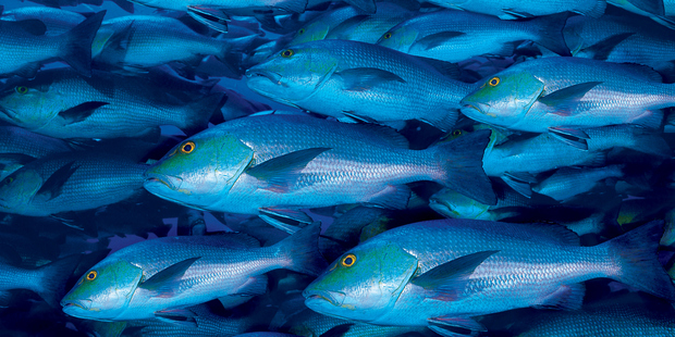 The movement's key focus will be reducing overfishing and pollution, and increasing aquaculture. Photo / Thinkstock