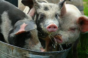 Some charities want to hog the whole rebate as well as the donation. Photo / Thinkstock