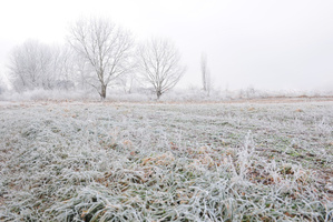 The winter has been beautiful, despite the frosts. Photo / Thinkstock