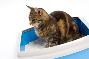 Humans run the risk of infection when they clean out their cats' litter boxes. Photo / Thinkstock