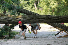 Residents of the Cleveland Park neighborhood of Washington, navigate underneath a downed tree. Photo / AP