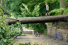 Tyler Taylor, 14, walks across a large downed tree in his hometown of Falls Church, Virginia. Photo / AP
