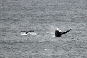 Japan each year kills hundreds of whales in Antarctic waters. Photo / AP