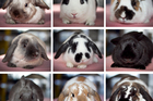 Some of the 18 rabbits available for adoption at the Auckland SPCA's Mangere branch, which is almost at capacity. Photo / Natalie Slade