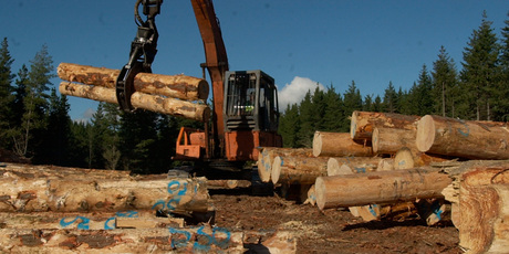 The carbon unit price is so low forest owners have little incentive to sell units or plant trees. Photo / APN