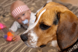 A guard dog against intruders outside of the home as well as those trying to niggle their way into a baby's body. Photo / Thinkstock