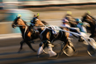 Injured driver Frank Cooney was placed in an induced coma to aid his recovery following a serious harness racing crash at Alexandra Park. Photo / Thinkstock