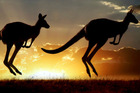 Kangaroos. Photo / Thinkstock