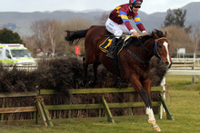 Volkswagin looks a leading chance in the $50,000 Wellington Steeplechase tomorrow.Picture / APN 