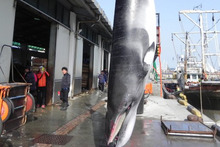 Korean newspapers have criticised plans to resume whaling. Photo / AFP